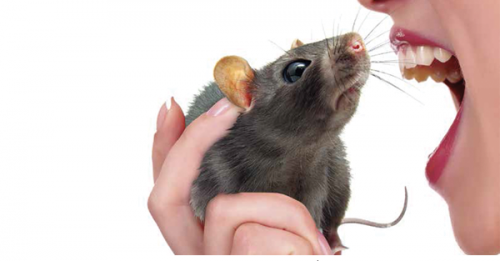 Rat-Bite Fever's Non-Specific Symptoms Make Patient History Important for Diagnosis