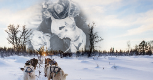 Canadian Emergency Physician Named Rookie Dog Musher in Yukon Quest