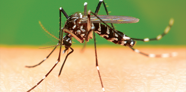 Zika Virus Transmission, Testing, and Treatment Information You Need to Know