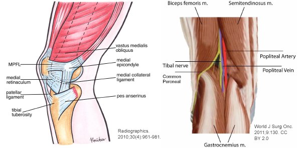 Figure 1: Anatomy of the patelofemoral joint.